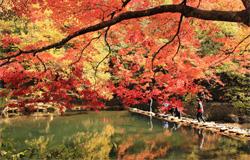首爾, 內藏山, 賞楓, Naejangsan, Maple Leave, Seoul