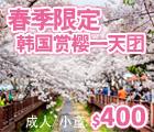 Jinhae Gunhangje Festival, 镇海军港节, Cherry Blossom, 韩国赏樱, 春季限定, Spring Limited Offer